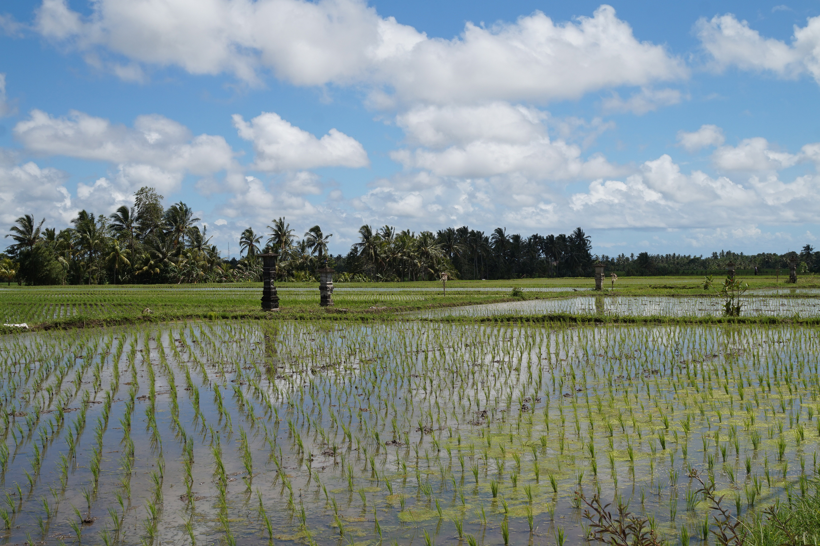Bali_Rice_Fields