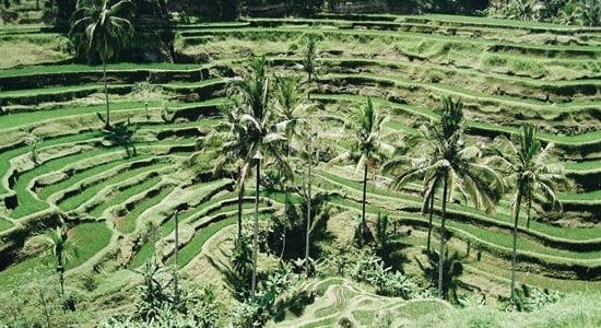 ubud bali food safari dining adventure